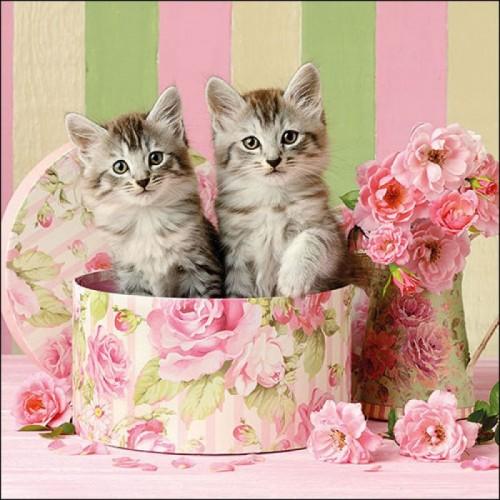 German Decoupage Napkins (5 pcs)  - Cats in a Box