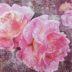 A pack of 12 by 12 inch German Decoupage Napkins ( 5 pcs )  - English Rose