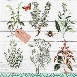 A pack of 12 by 12 inch German Decoupage Napkins ( 5 pcs )  - Floral Study