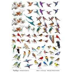 CrafTangles A4 Transfer It Sheets - Birds