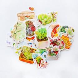 Succulents Stickers or Ephemera (30 pcs)