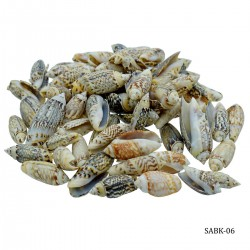 Craft Shells (100 grams) (SABK-06)