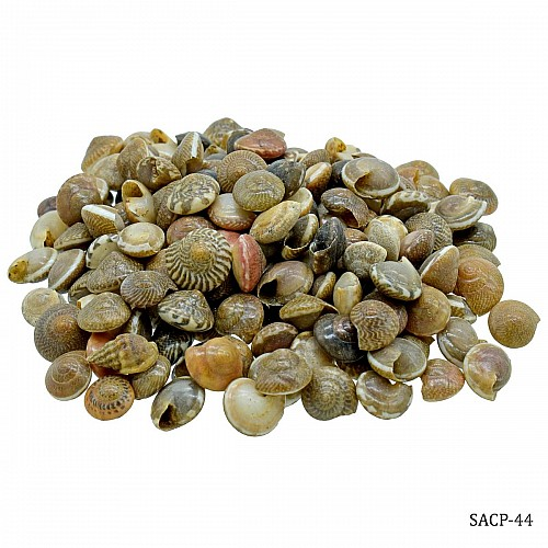 Craft Shells (100 grams) (SACP-44)