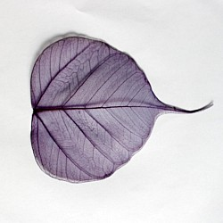 Mulberry Paper Leaves (Extra Large) - Purple  (Pack of 5 leaves)