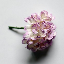 Carnation Flowers - White and Lavendar (Pack of 10 flowers)