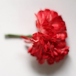 Carnation Flowers - Red (Pack of 10 flowers)